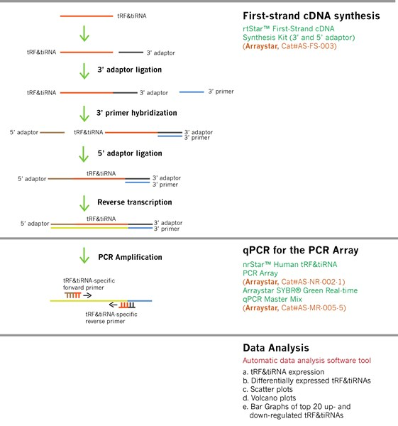 Workflow_Figure-tRF_PCR_Array