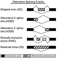 Alternative Splicing events