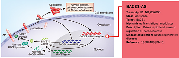 LncRNA BACE1-AS in neurodegenerative diseases