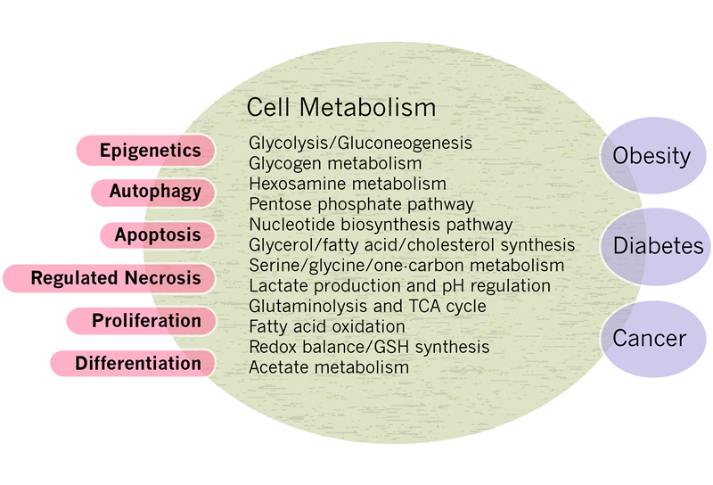 Figure_1_schematic_of_cell_metabolism