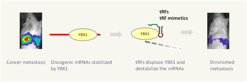 tRF___tiRNA_Small_noncoding_RNAs_03