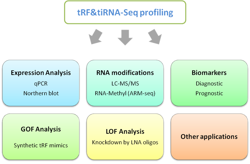tRF___tiRNA_Small_noncoding_RNAs_08
