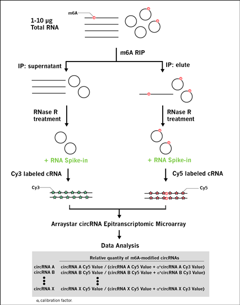 workflow_of_m6A_circRNA_microarray