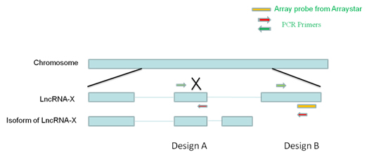 lncrna qpcr assay design