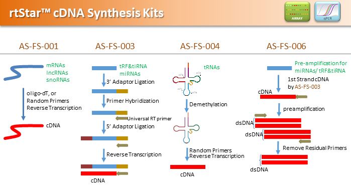 cDNA_synthesis